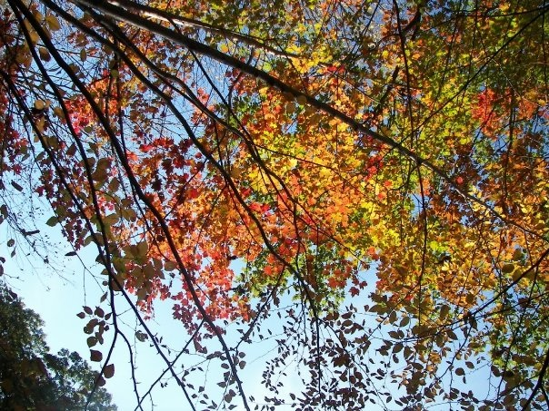 Fall Hike 2008-13