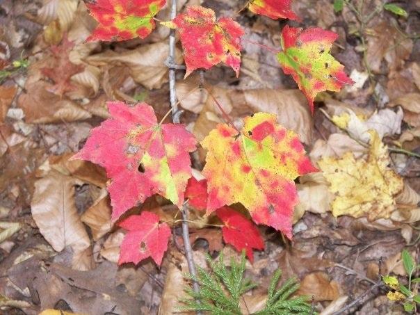 Fall Hike 2008-6