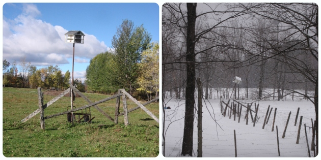 Changing Seasons Collage