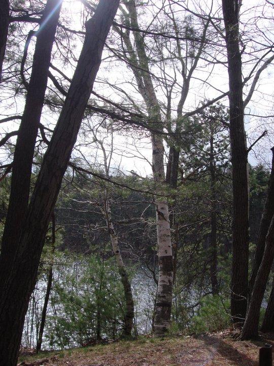 walden birch
